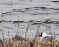 Ornithologie en Bassée : les hivernants