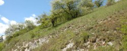 PRONATURA_vallee-du-cygne