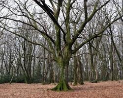 Reconnaissance des arbres en hiver (bourgeons, rameaux, écorces)
