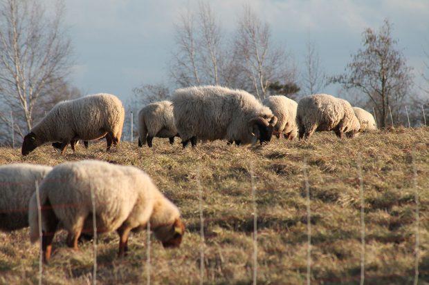 Chantier de soutien au projet pastoral de la plaine de Champ Minette