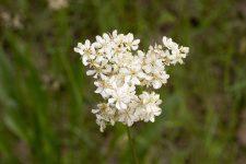 Initiation à la reconnaissance des principales familles de plantes