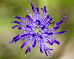 Sortie botanique, en forêt de Fontainebleau