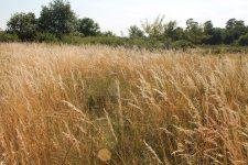 Découverte des réserves biologiques et des milieux du massif de Fontainebleau