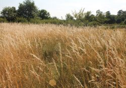 Actus sur le site Natura 2000 du massif de Fontainebleau