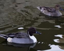 Découverte et observations des oiseaux de la Bassée
