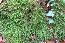 Sortie bryologique et botanique