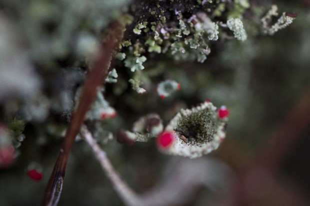 Sortie lichens