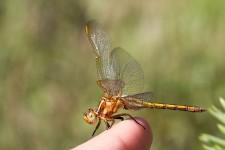 Découverte des insectes et petites bêtes de la Bassée
