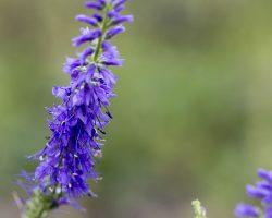 Sortie botanique et mycologique