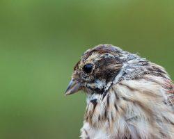 Les oiseaux migrateurs en Bassée