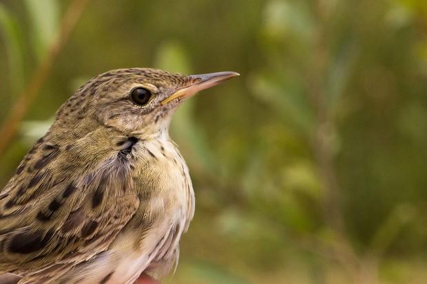 Sortie ornithologique, en vallée du Loing