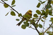 Initiation aux chants d'oiseaux