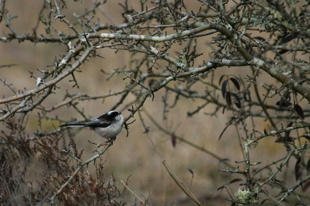 Déclin des oiseaux nicheurs en France métropolitaine
