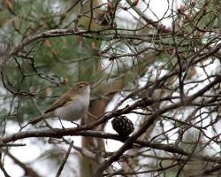 Découverte des oiseaux de la plaine de Chanfroy