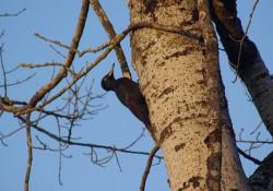 Journée internationale des forêts Exposition pédagogique « Mille et une traces en forêt »