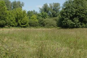 Découverte de la Prairie de Moret-sur-Loing