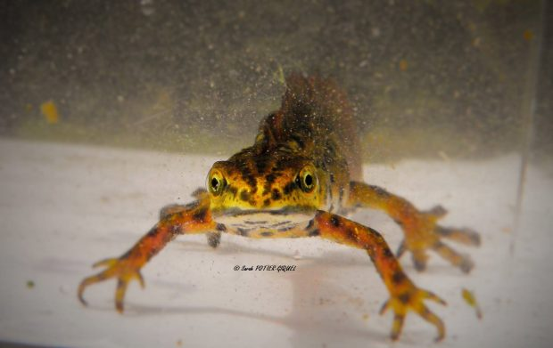 A la recherche des Amphibiens