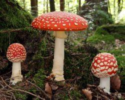 Sortie mycologique (attention, changement de lieu de rendez-vous)