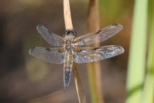Sortie botanique et entomologique