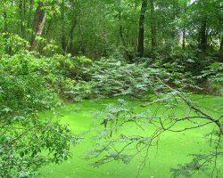 Pollution en forêt de Fontainebleau – communiqué de presse ANVL