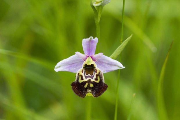Sortie de découverte des orchidées