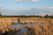 Sortie de découverte des réserves biologiques et des milieux du massif de Fontainebleau