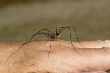 Découverte du monde des araignées