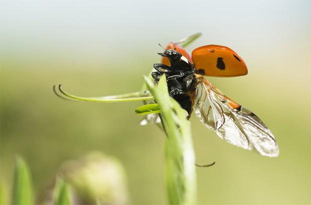 Publication de l'ouvrage «Le jardin secret des insectes»