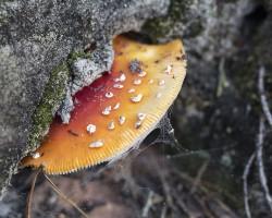 Sortie mycologique, en forêt de Villefermoy