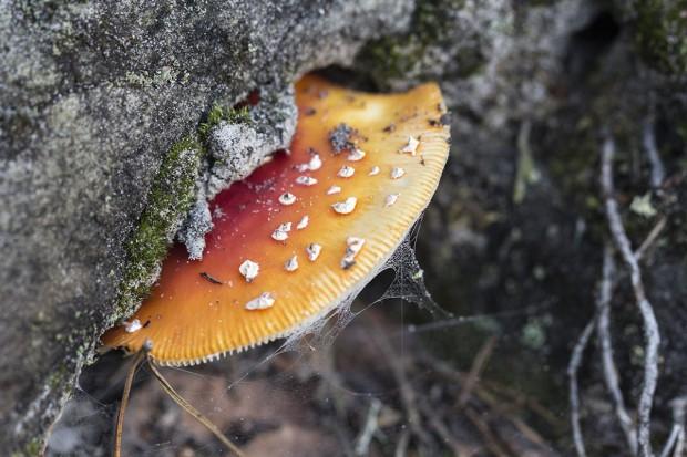 Sortie mycologique en forêt d'Othe