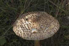 Sortie mycologique