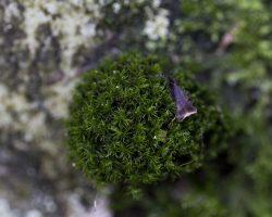 Sortie bryologique en forêt domaniale de Fontainebleau