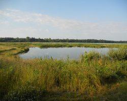 Offre d'emploi : Chargé(e) de Mission Biodiversité – Zones humides (H/F)