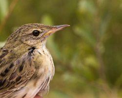 Ornithologie en Bassée