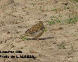Sortie ornithologique en forêt domaniale des Trois Pignons
