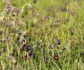 Lancement de l'atlas de la biodiversité communal d'Avon