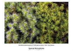 Parution du bulletin de l'ANVL consacré aux Bryophytes