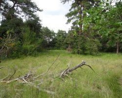 Actions en faveur des pelouses calcicoles