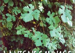 Une plaquette d'information sur la Vigne sauvage en Bassée