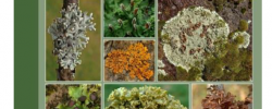 Lichens foliacés de France-20210906